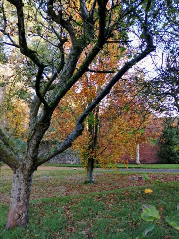 Hidden Huntley autumn colours