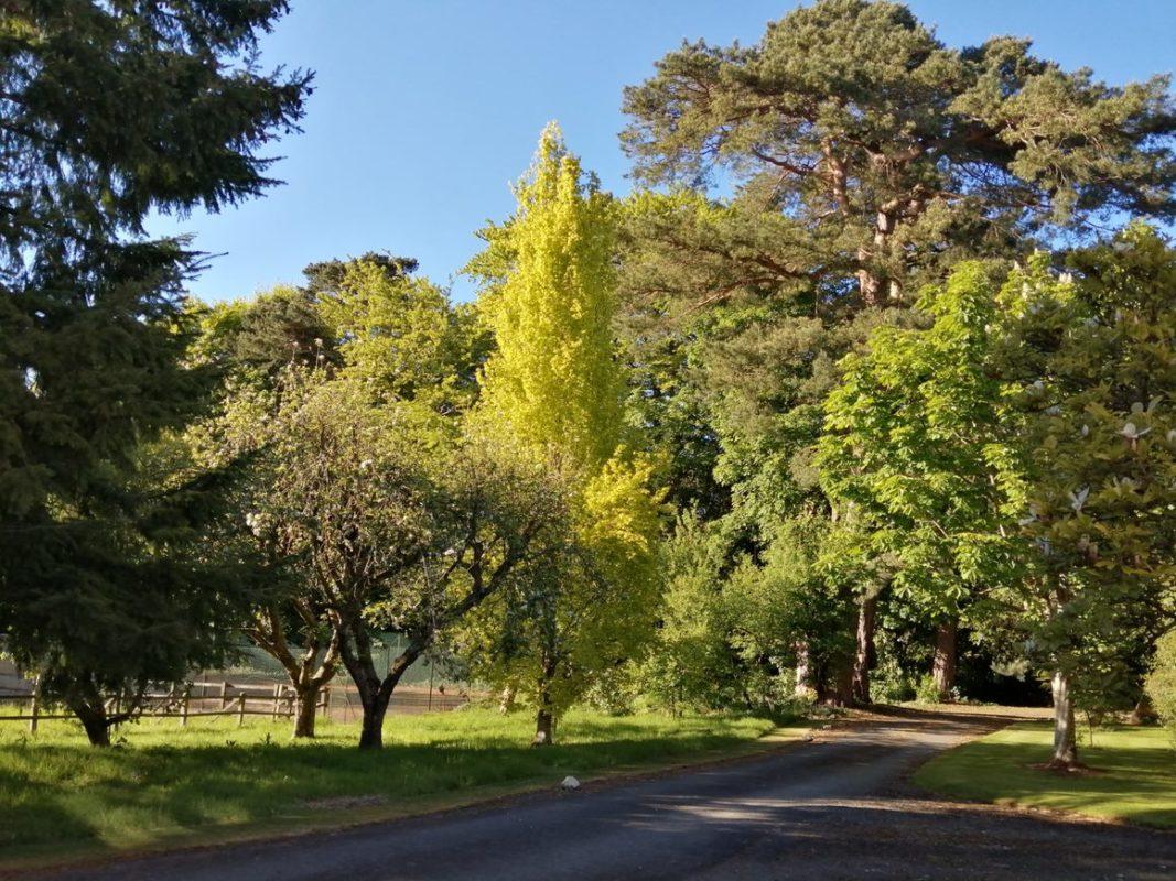Huntley orchard
