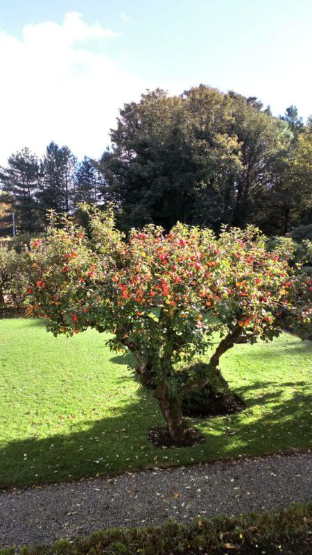 Huntley gardens